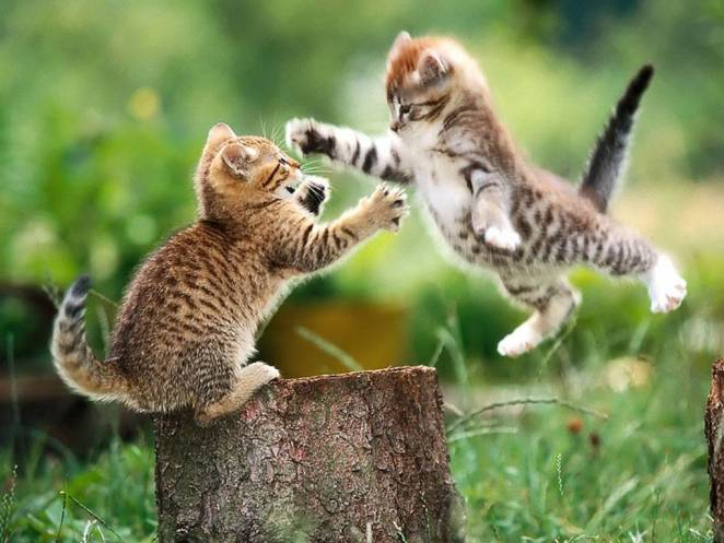 Pictures of Cute Kittes (11)