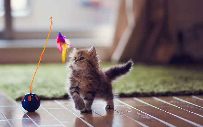 Pictures of Cute Kittes (12)