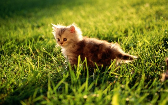 Pictures of Cute Kittes (13)