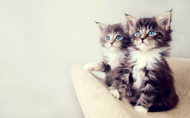 Pictures of Cute Kittes (14)