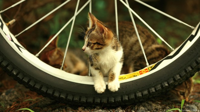 Pictures of Cute Kittes (6)