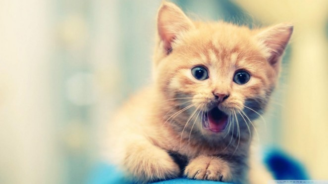 Pictures of Cute Kittes (9)