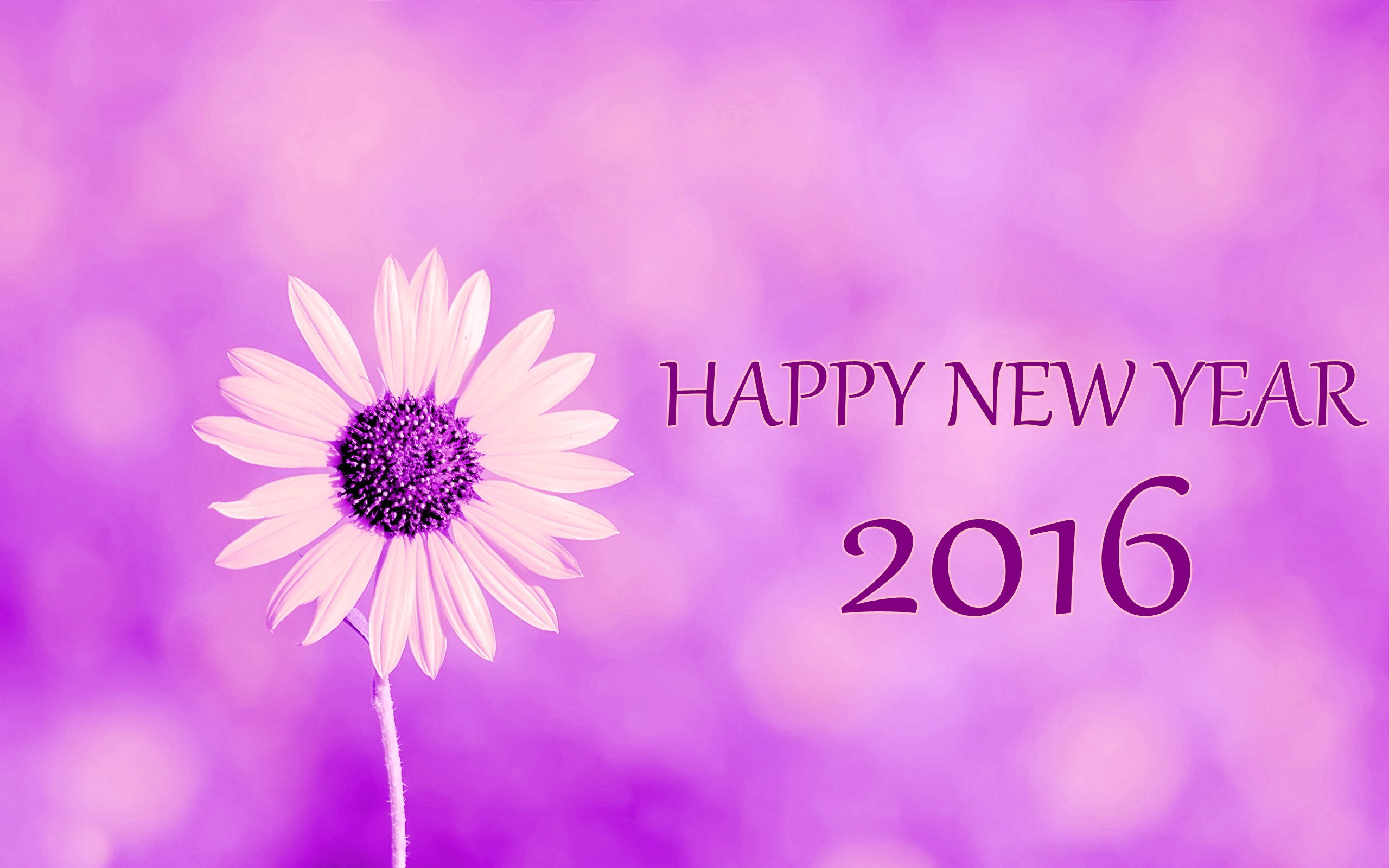 beautiful happy new year wallpapers hd 12