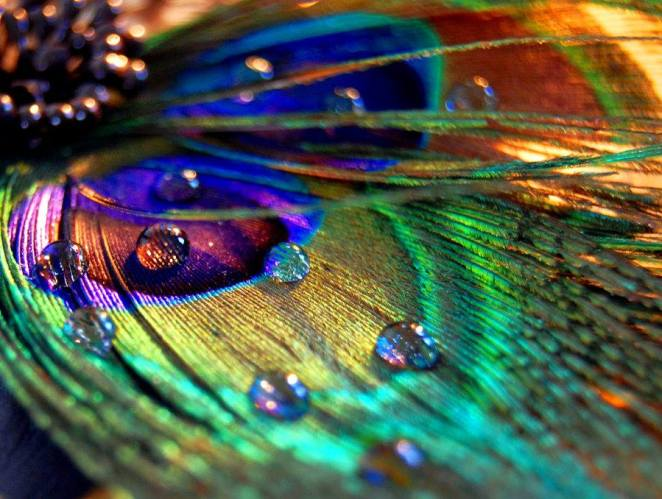 30-stunning-raindrop-peacock-feather-works-9