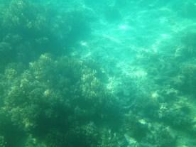 Underwater @ Fiji