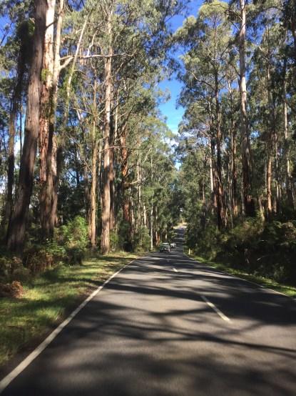 Forest around Walhalla, Victoria, Australia (Photo credit: lavaleandherworld.wordpress.com)