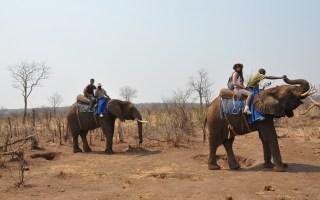 Elefanti_Zimbabwe