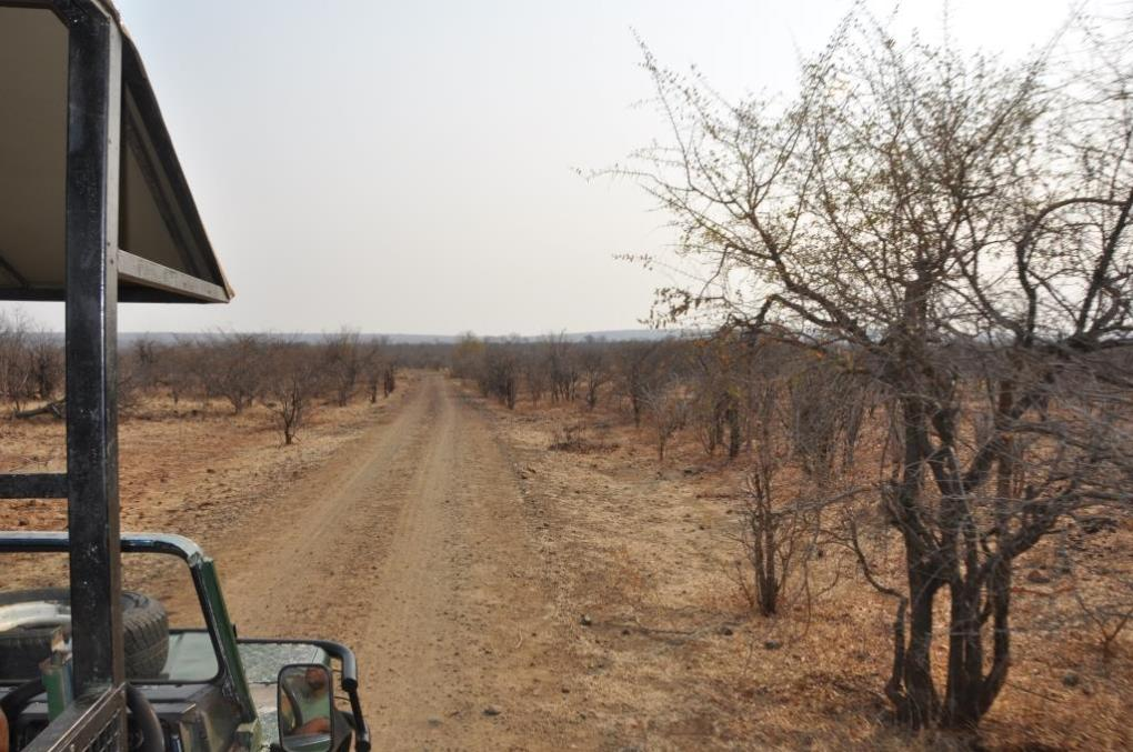 Game drive allo Zambesi National Park