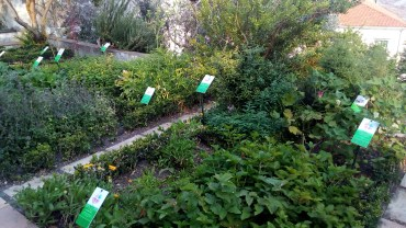 Giardino della Minerva 4