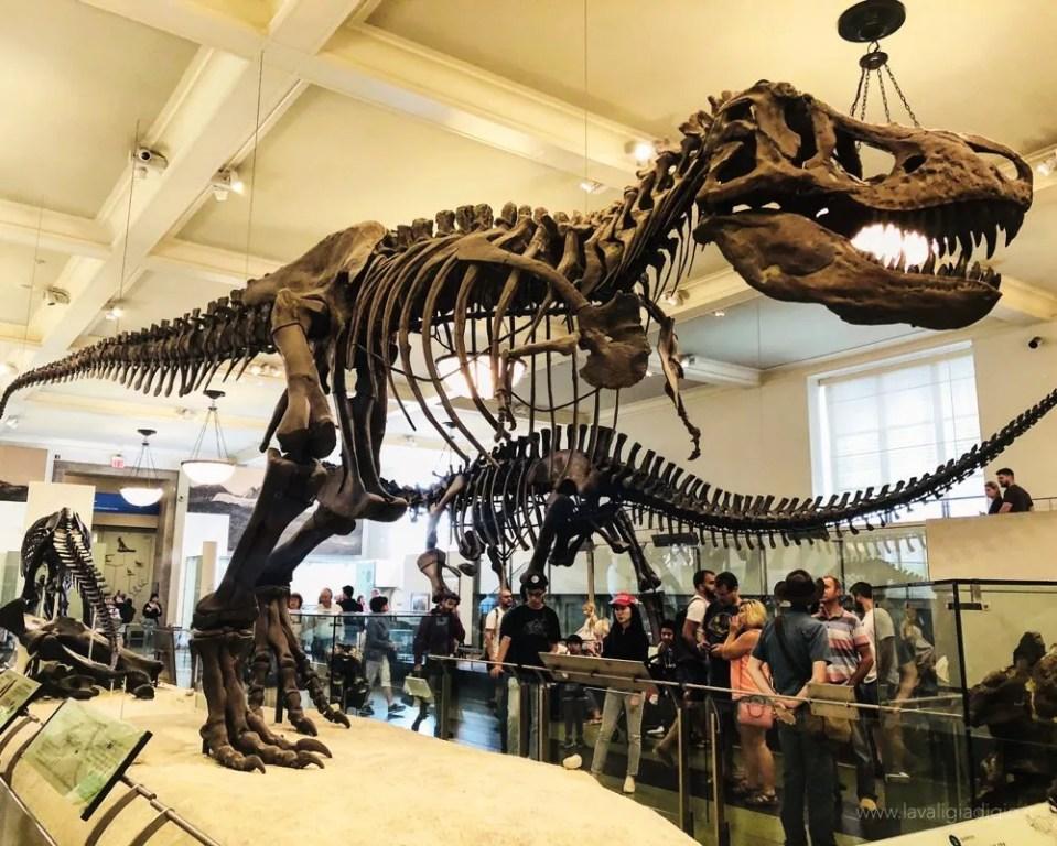 itinerario New York natural history museum