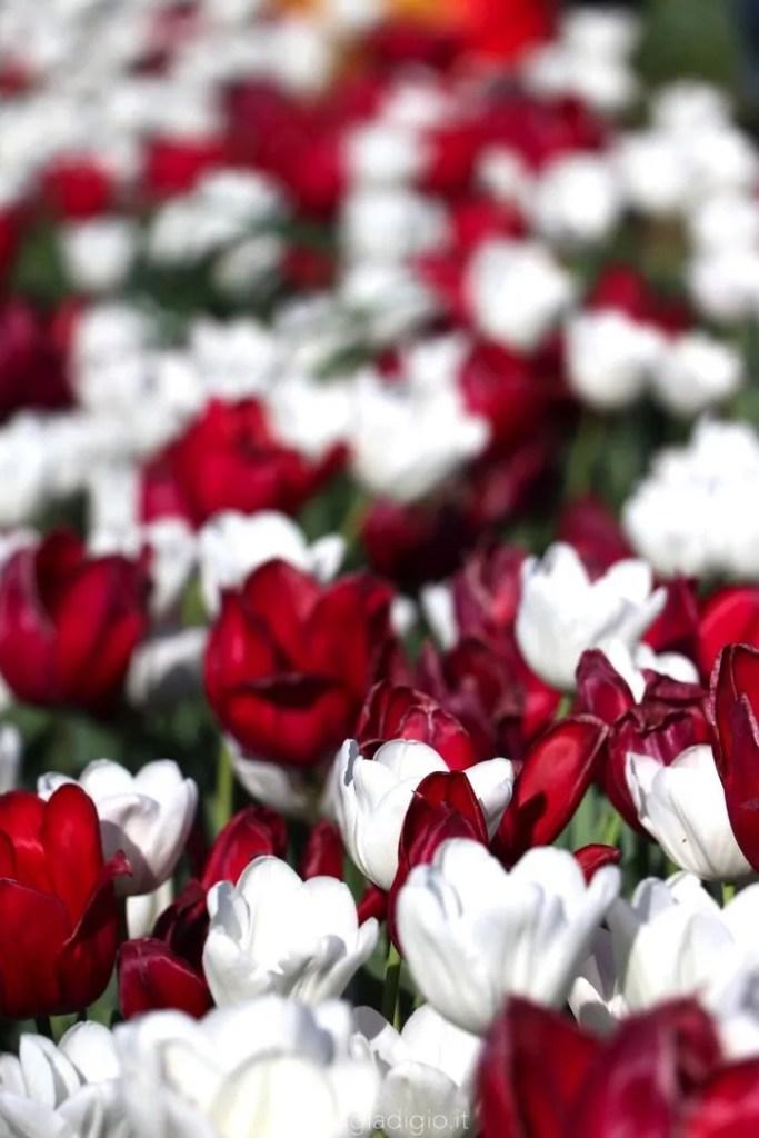 tulipark di roma biglietto