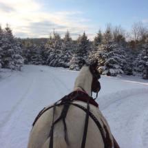 hiver-sleigh-sapin