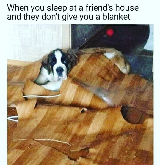 "Excuse me, is this floor pet-proof? ""Nature finds a way."" #flooring #homedesign #petsofinstagram #dogsofinstagram #kitchendesign #kitchenremodel"