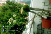 PIC12492_Balcony_Plants_WP