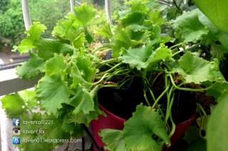 PIC12696_Balcony_Plants_WP