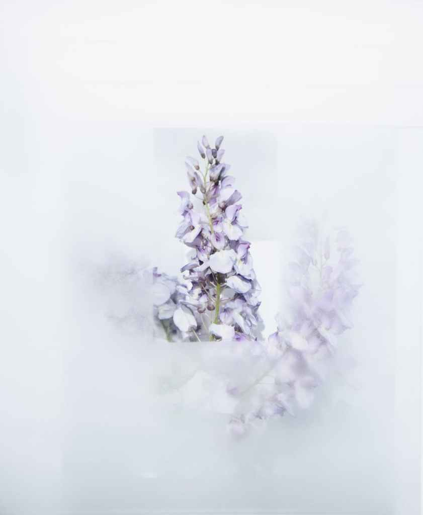 white petaled flowers on a white background