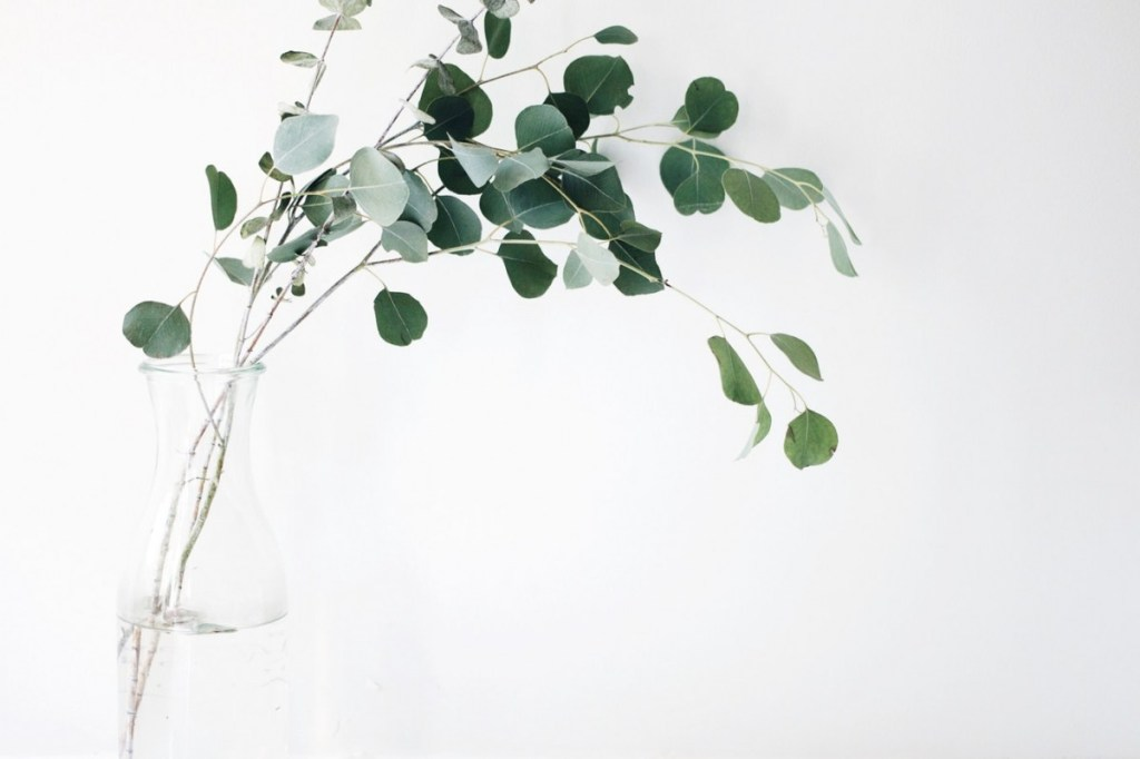 Eucalyptus stems in vase