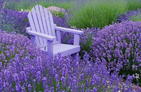 lavender lodge garden health retreats
