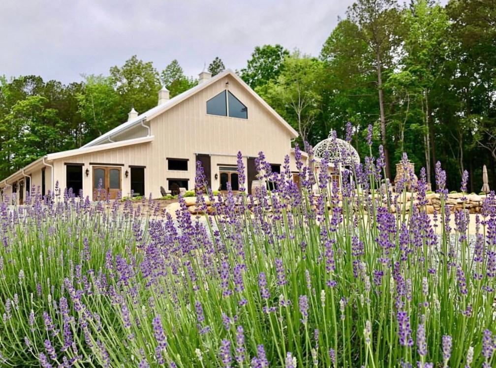 Lavender Lavender Oaks Farm Chapel Hill Nc