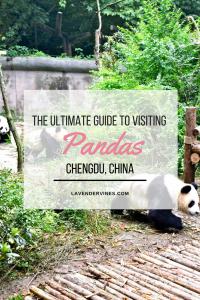 Panda-Chengdu-China