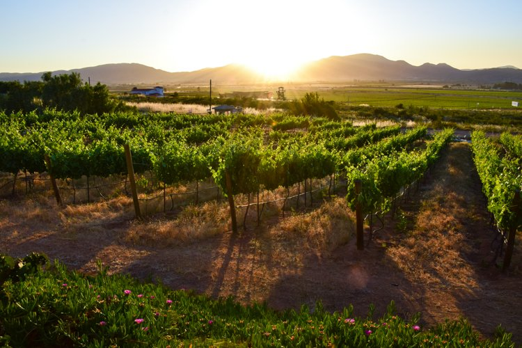 Baja California Guadalupe Valley Wineries, Hotel Hacienda Guadalupe