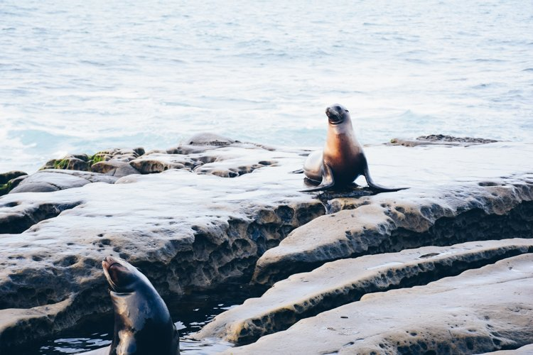 San Diego's Best Outdoor Adventures - La Jolla Cove Seals