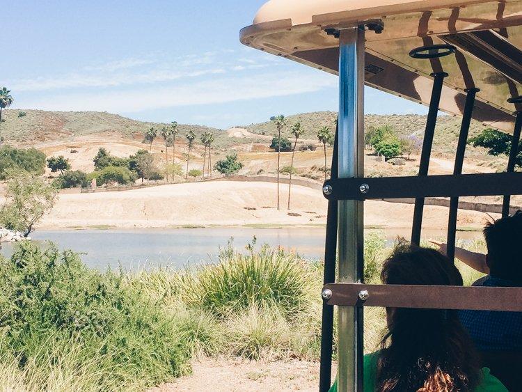 Africa Tram - San Diego Zoo Safari Park