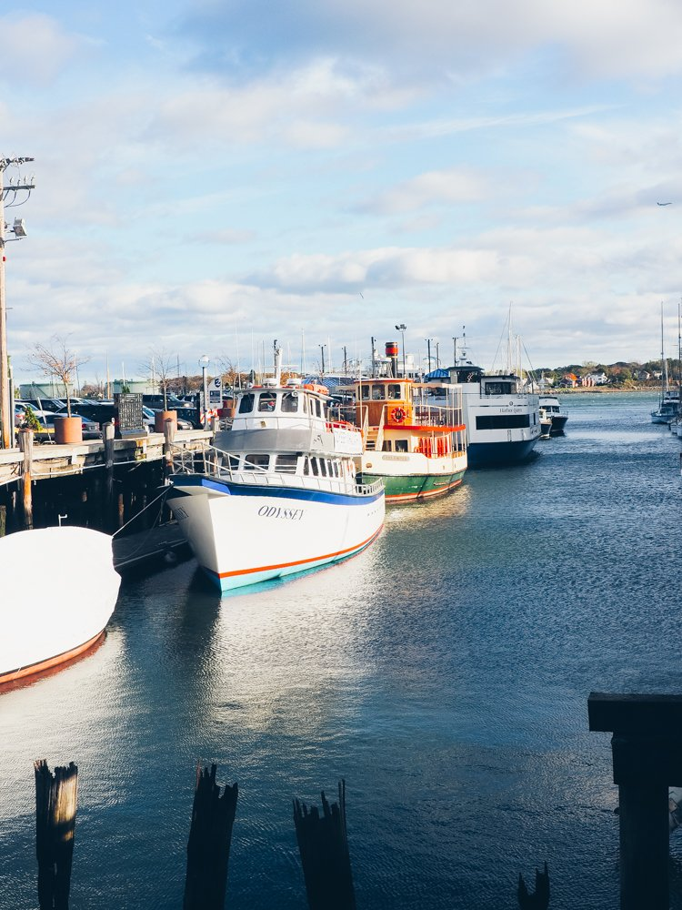 Things to do in Portland, Maine - Odyssey Whale Watching
