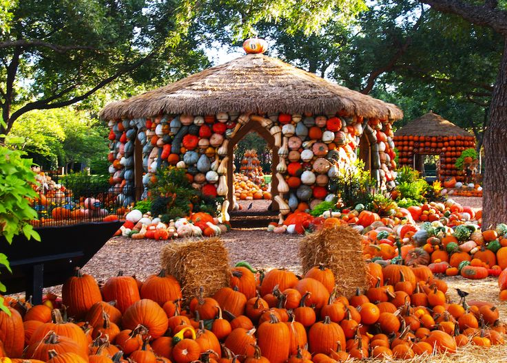 Best Places to Visit in the Fall - Dallas, Texas