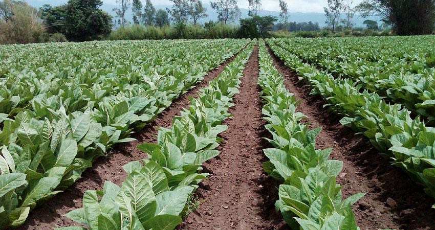 laverdaddemonagas.com sociedad venezolana de ingenieros agronomos denuncia pirateria en venta de agroinsumos 1