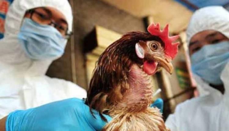 gripe aviar H10N3