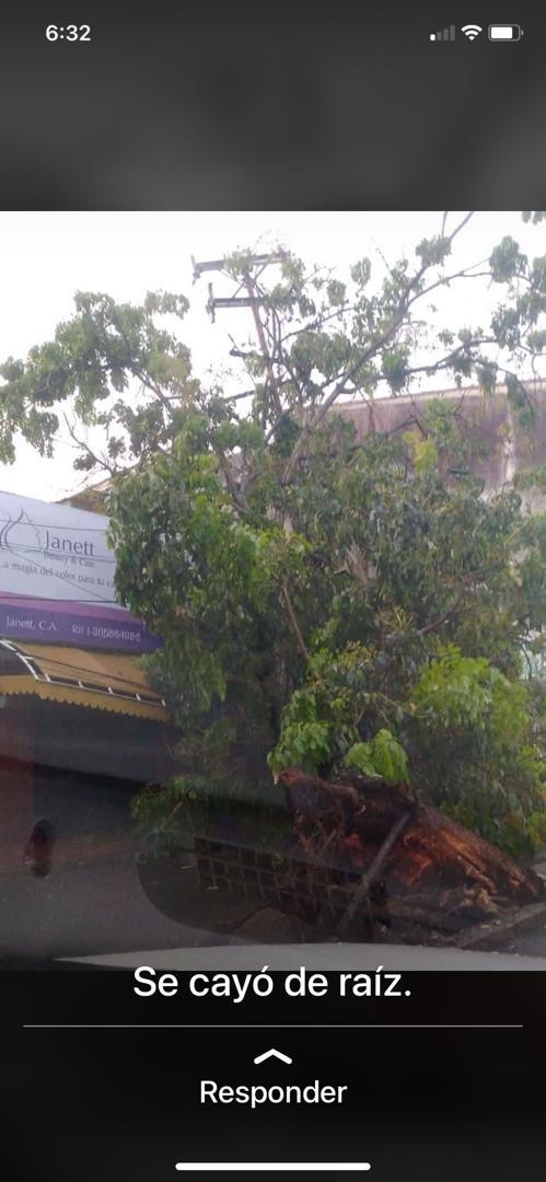 desplome de arbol en la avenida miranda dejo sin electricidad e internet a parte de maturin laverdaddemonagas.com arbol3