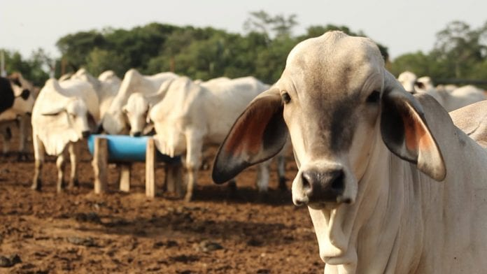 fedenaga producción de carne