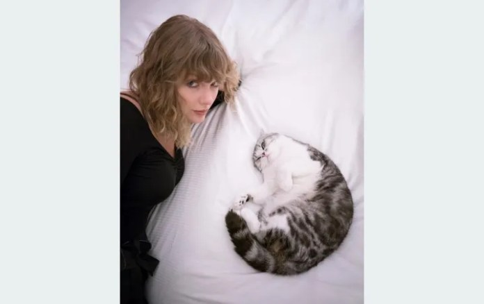Taylor Swift invites everyone to follow the example of your cat in this quarantine