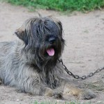 In Umbria, è vietato tenere i cani a catena