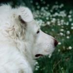 Senza cane niente uomo, uno spunto di riflessione