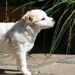 Perché Pippi, la scelta del nome di un cane
