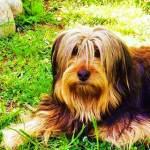 Ciao, mi chiamo Spike e sono un cane fortunato