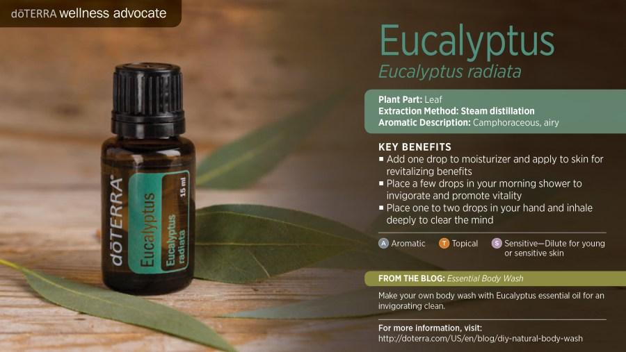 wa-eucalyptus