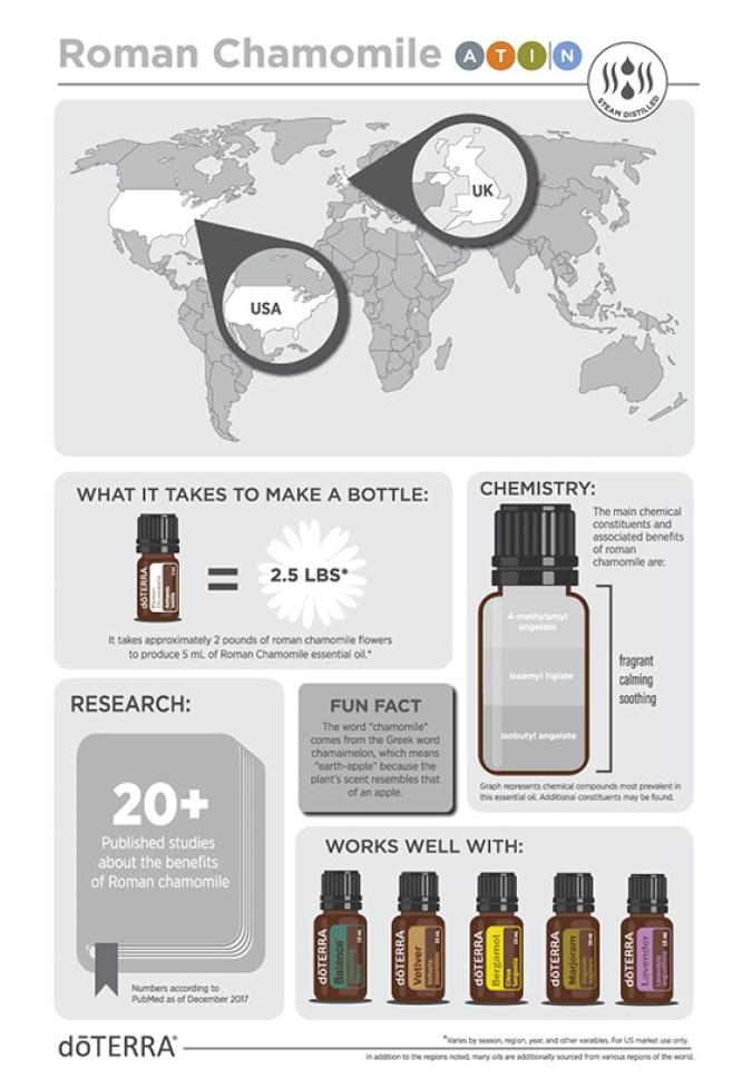 2x3-566x819-roman-chamomile-infographic-1