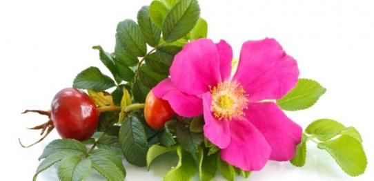 Aceite-de-rosa-mosqueta-1