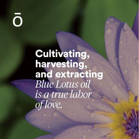 Blue lotus 4
