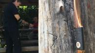 Arco realizzato da Donato e Sergio Milesi per Osvaldo Micheletti Data fine costruzione:21/06/2018 Arco personalizzato con medaglia del circuito Roving. A detta di Osvaldo (e