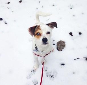 la-vida-con-pancho-nieve