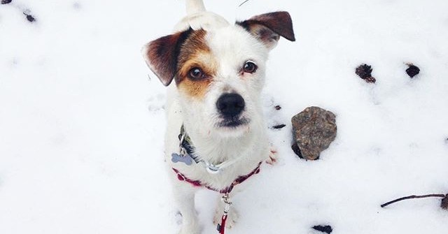 tips-para-proteger-a-tu-perro-del-frio