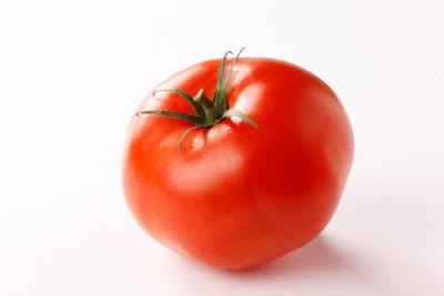 tomate-sin-madurar-dañino-para-los-perros
