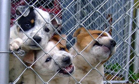 adopción-de-perros