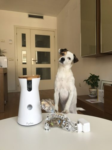 Pancho-y-la-furbo-dog
