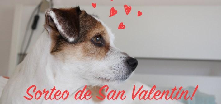 sorteo-perros-san-valentin