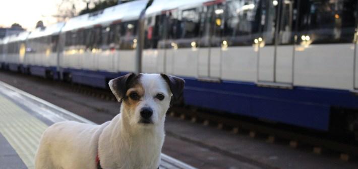 Pancho-viajando-en-el-metro-de-Madrid